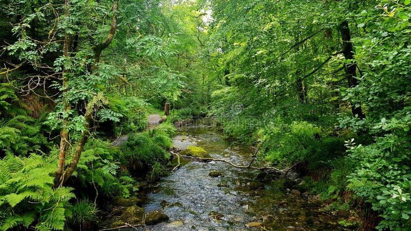 Lydfordkloof, Dartmoor Devon stock foto