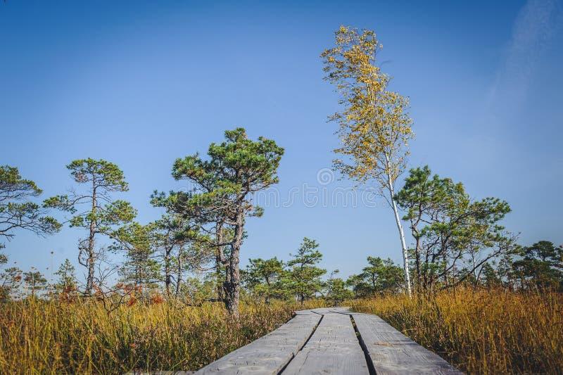 Lyftt myr Strandpromenad i den Kemeri nationalparken Låg vinkel arkivbilder