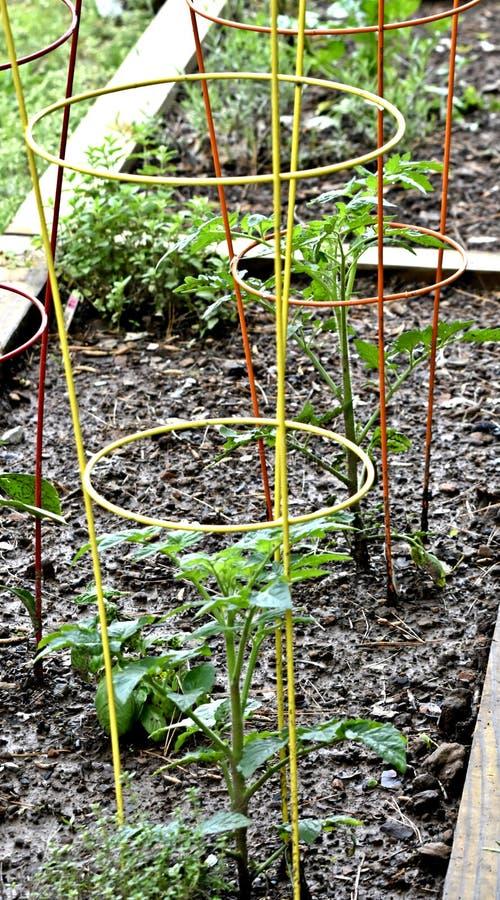 Lyftt sänggrönsakträdgård i centrala Arkansas royaltyfria bilder