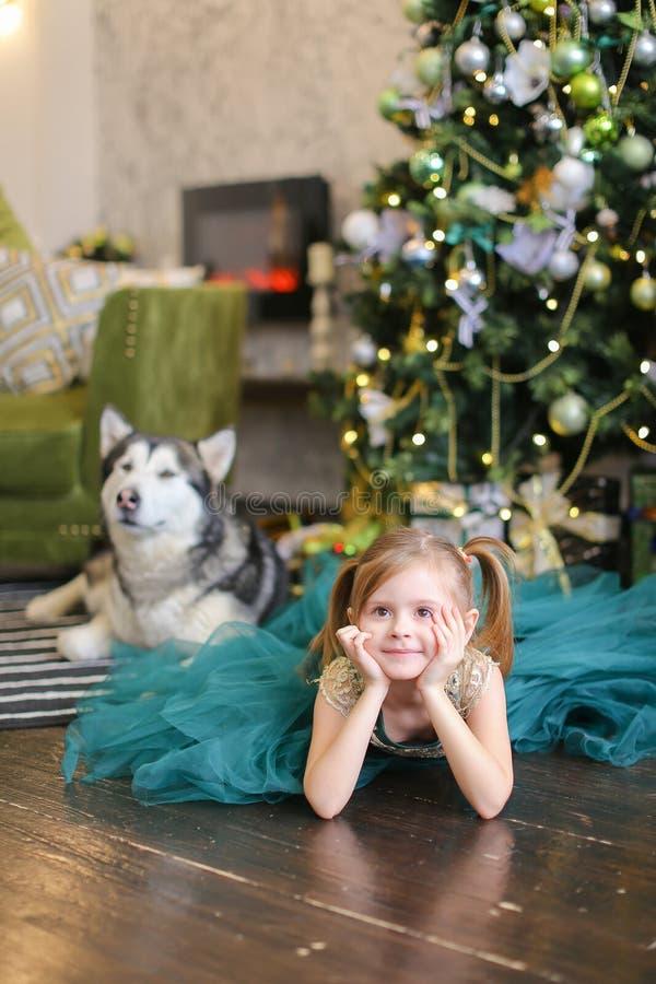 Lyig de port de robe de petite gentille fille avec le malamute près de l'arbre de Chrastmas image libre de droits