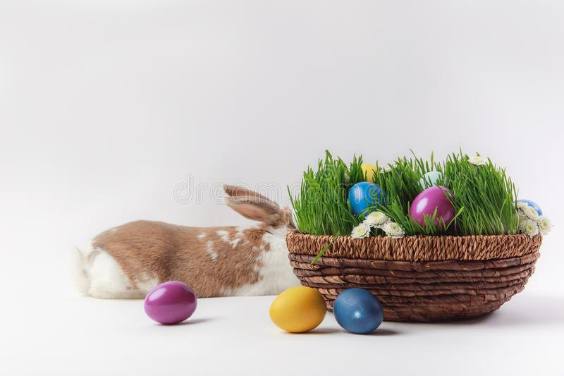 Lying bunny and basket with grass and painted easter eggs stock image