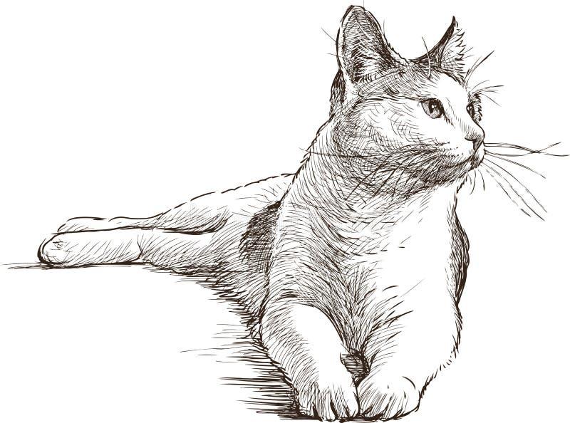 Lying cat stock illustration