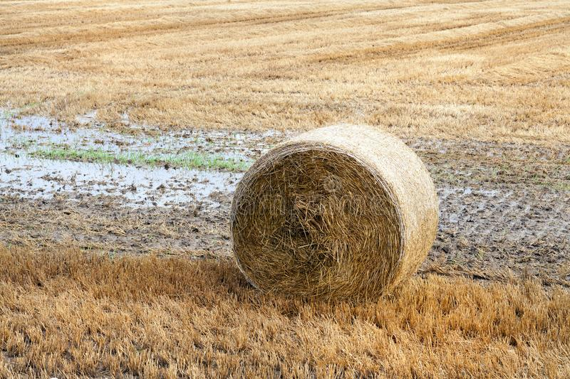 stack of straw royalty free stock image