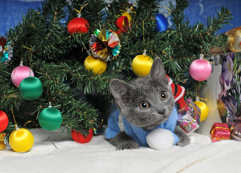 Lying kitten with christmas decorations