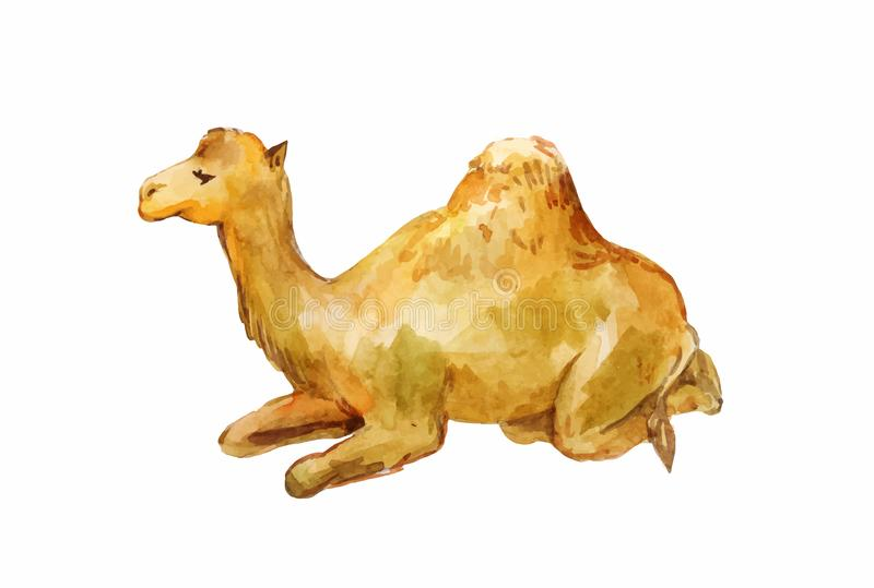 Lying one-humpy camel isolated on white. Lying one-humpy little camel. Watercolor illustration isolated on white background royalty free illustration
