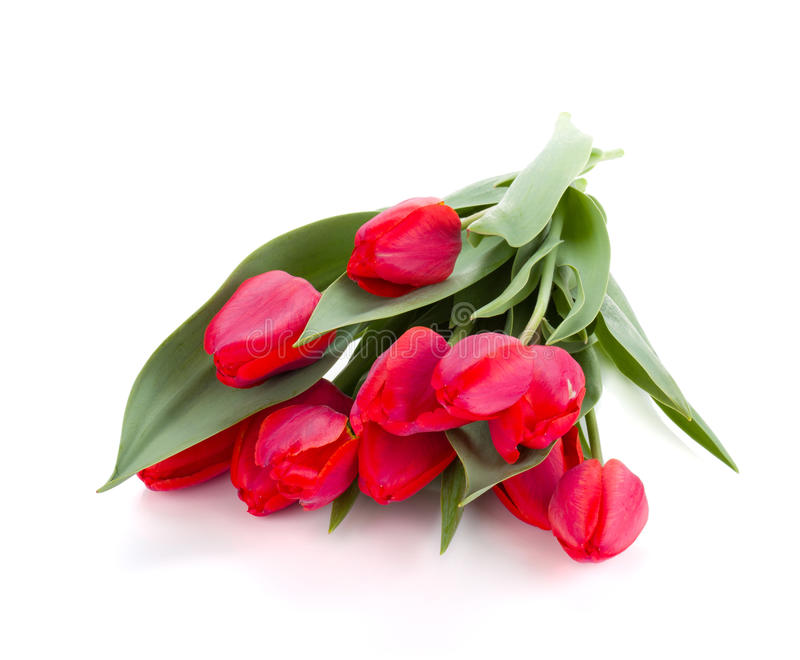 Lying red tulips bouquet. Isolated on white background stock image