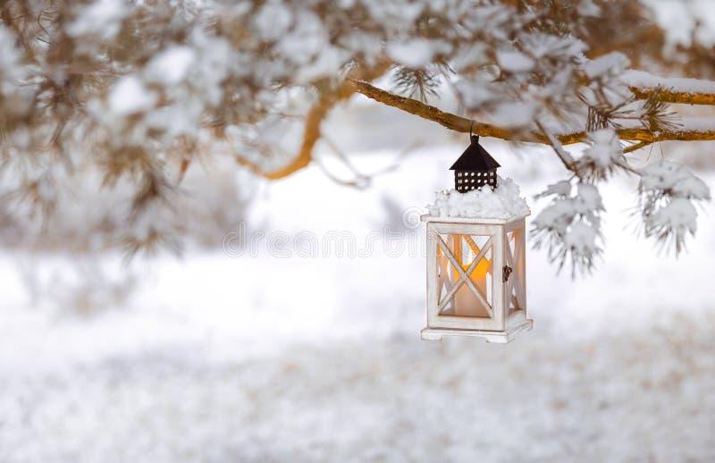 Lykta med stearinljuset på ett snöig träd royaltyfria foton