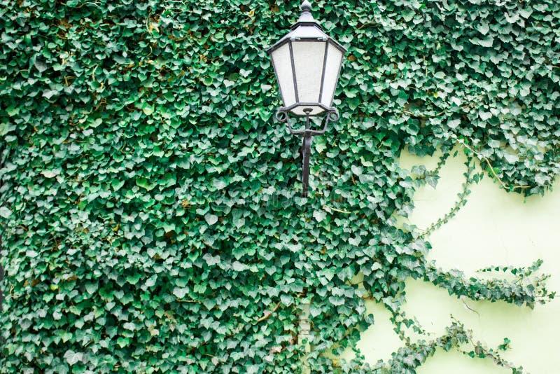 Lykta på den täckte gamla väggen royaltyfria bilder
