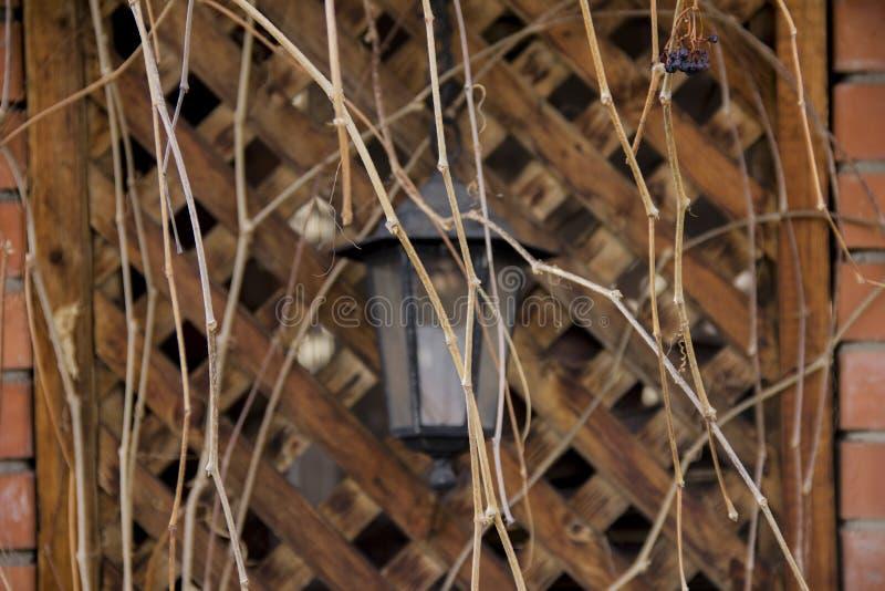 Lykta som hänger på väggen av axeln Axel som flätas ihop med stammar av druvor utan sidor royaltyfri bild