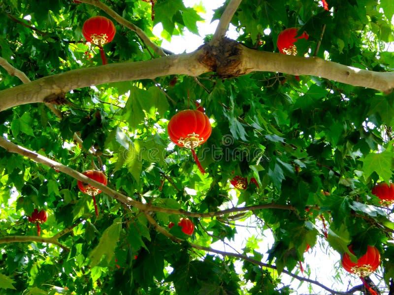Lyktor som hängs på träden royaltyfri foto