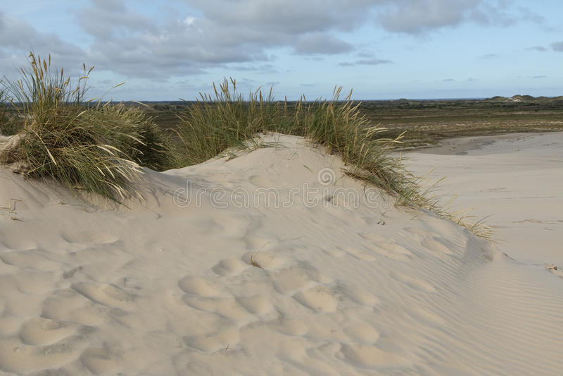 Lyme gräs i sanddyn royaltyfria bilder