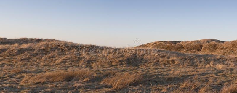 Lyme gräs i solnedgången arkivbild