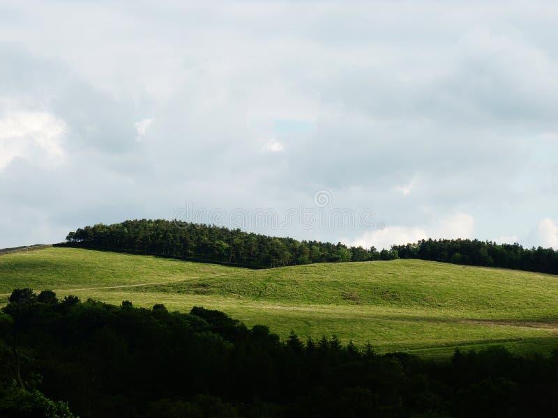 Lyme parkerar den wood lymen brittiska cheshire royaltyfria foton