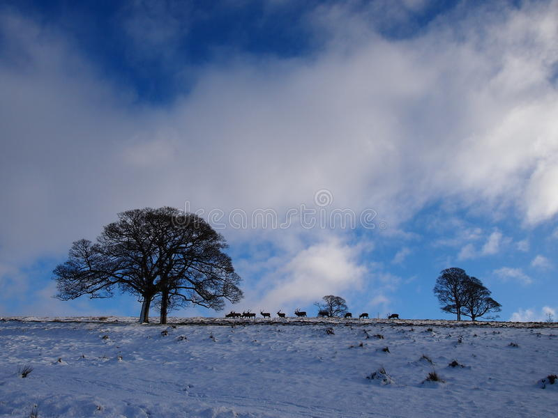 Lyme parkerar i vintern, England fotografering för bildbyråer