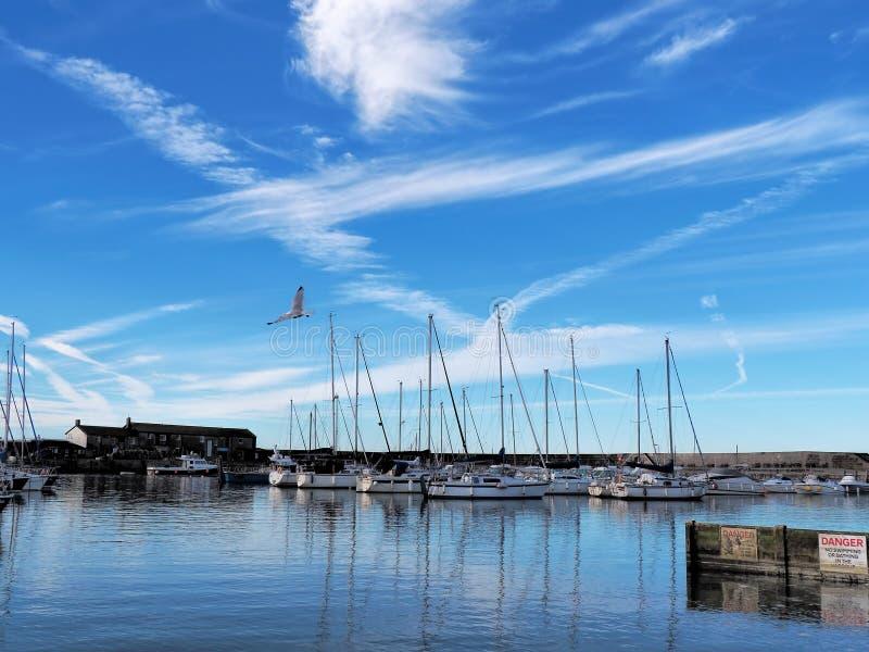 Lyme Regis Harbour - Juli morgon royaltyfri fotografi