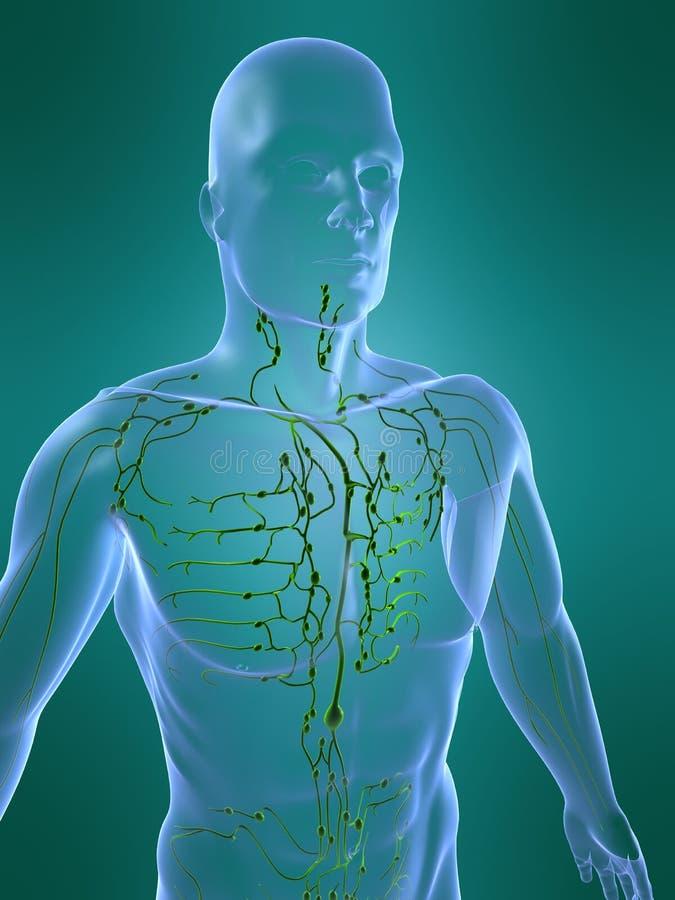 Lymfatisch systeem stock illustratie