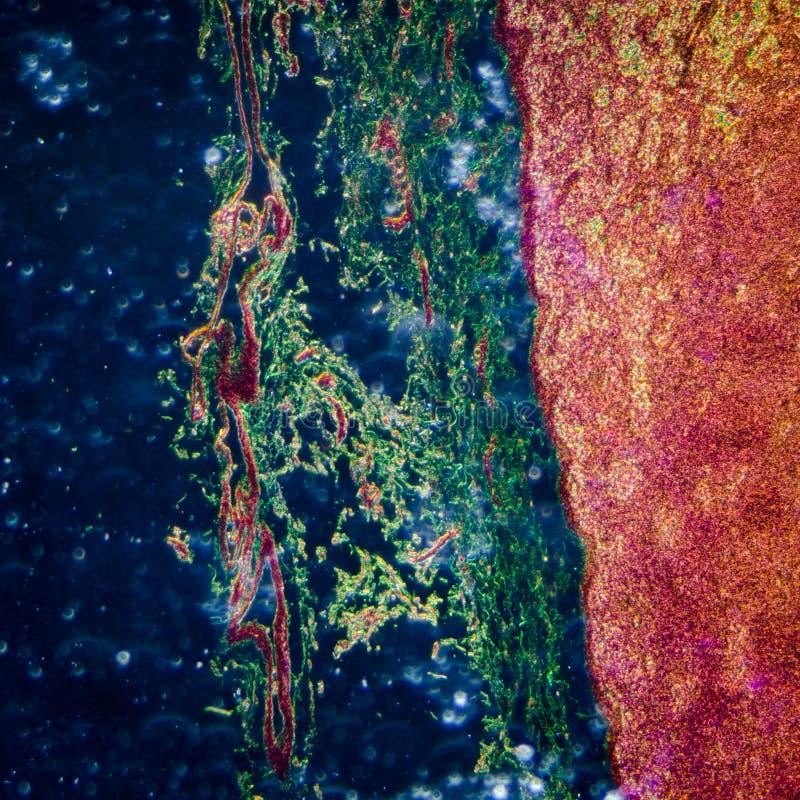 Lymphatic knutpunktsilkespapper arkivfoto