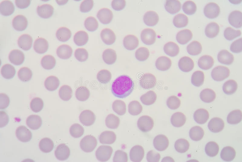 lymphocyte arkivfoto