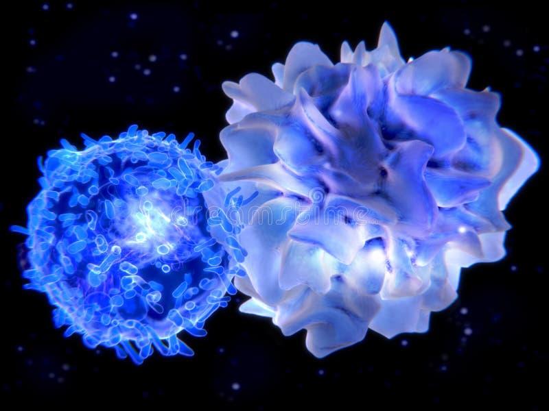 Lymphocyte T agissant l'un sur l'autre avec de l'antigène présentant la cellule RPA illustration libre de droits