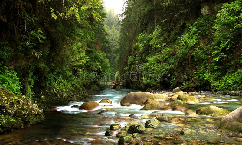 Lynn Canyon Creek immagini stock