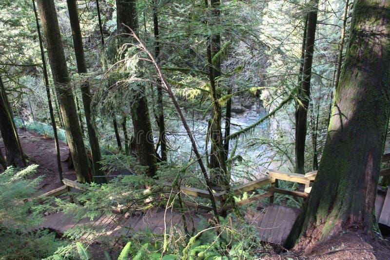 Lynn Canyon Park fotografia stock libera da diritti
