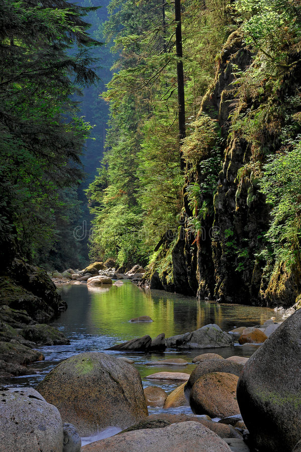 Lynn Canyon in Vancouver royalty free stock photo