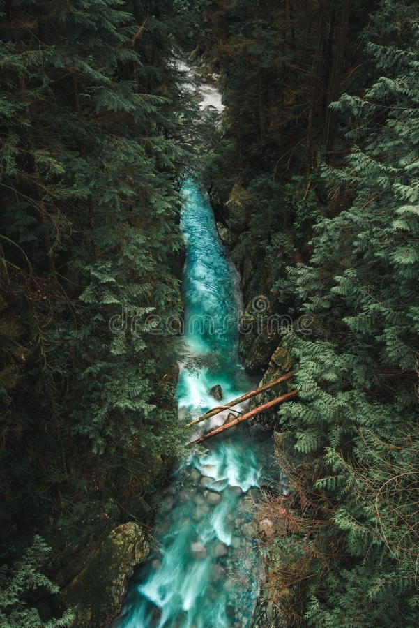 Lynn Canyon in Vancouver from a bridge royalty free stock photos