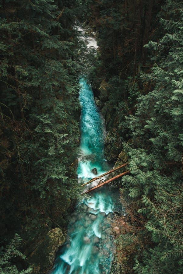 Lynn Canyon in Vancouver van een brug royalty-vrije stock foto's