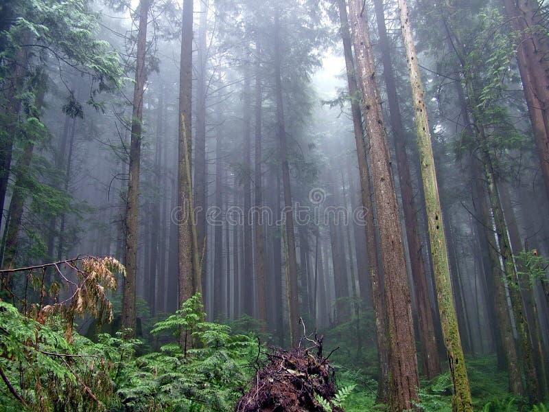Lynn Peak Trail en Lynn Headwaters Regional Park images libres de droits