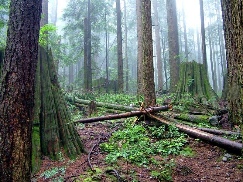 Lynn Peak Trail en Lynn Headwaters Regional Park photo stock