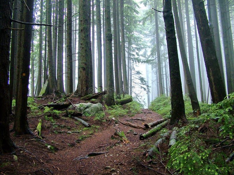 Lynn Peak Trail en Lynn Headwaters Regional Park photo libre de droits