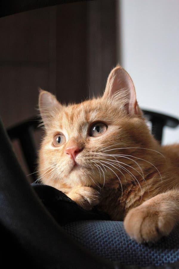 lynnig katt royaltyfri foto