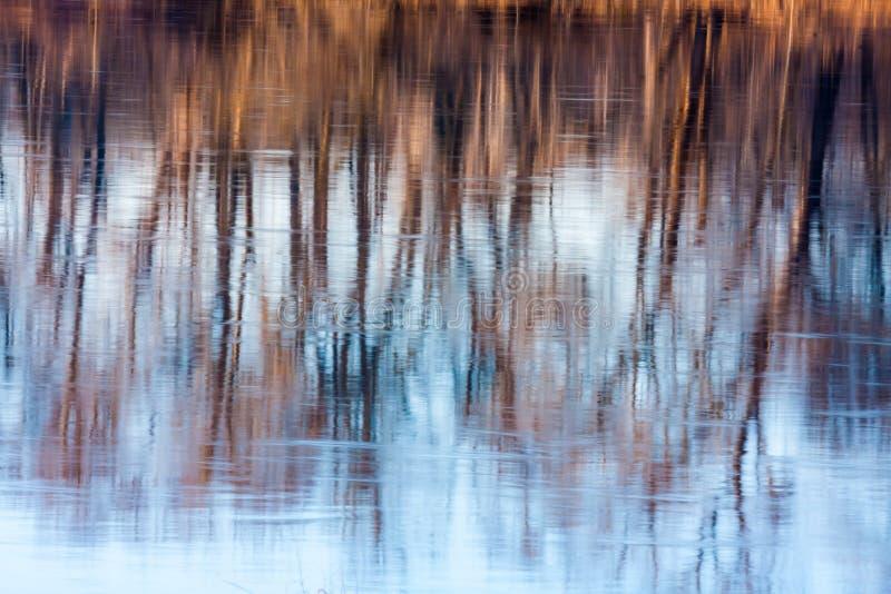 Lynnig reflexion av kalt, Autumn Trees royaltyfri bild