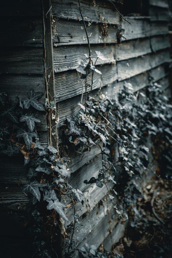 Lynnigt och spöklikt gammalt träskjul arkivfoton