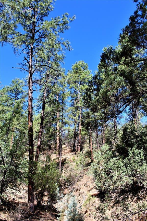Lynx See, Bradshaw-Revier, Prescott National Forest, Staat Arizona, Vereinigte Staaten lizenzfreie stockfotos