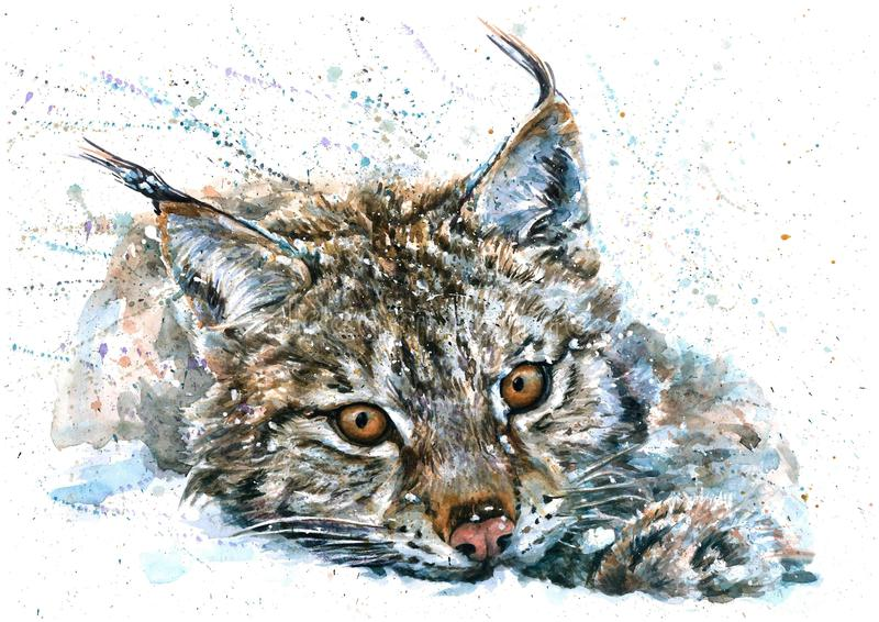 Lynx watercolor predator animals wildlife painting royalty free illustration