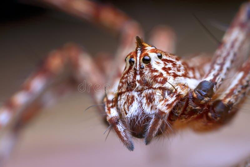 Lynxspin op groen blad stock fotografie