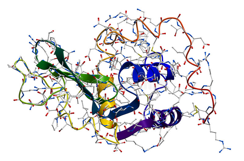 Lysozyme, το φυσικό αντιβακτηριακό ένζυμο απεικόνιση αποθεμάτων