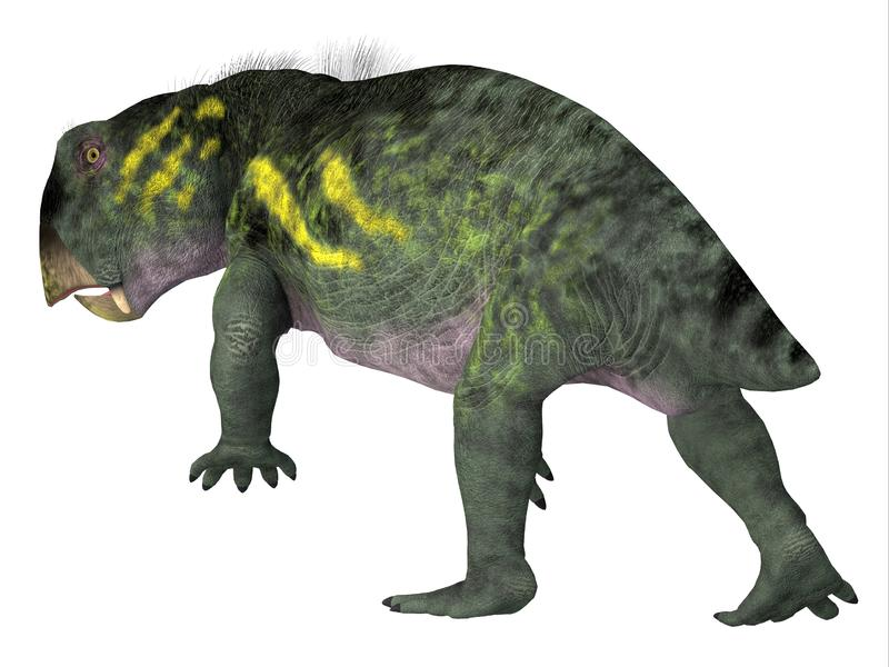 Lystrosaurus Dinosaur Tail. Lystrosaurus was a dicynodont therapsid herbivore dinosaur that lived in several countries during the Triassic and Permian Periods royalty free illustration