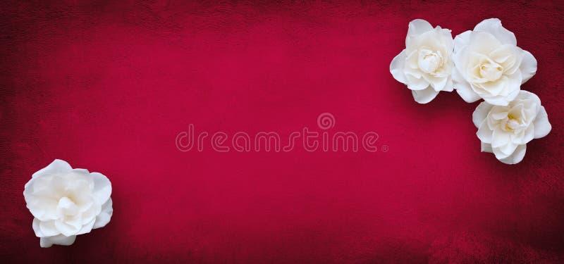 Lyxig modell för kortdesign med blommor för vita rosor arkivfoton
