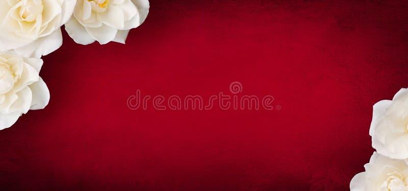 Lyxig modell för kortdesign med blommor för vita rosor fotografering för bildbyråer
