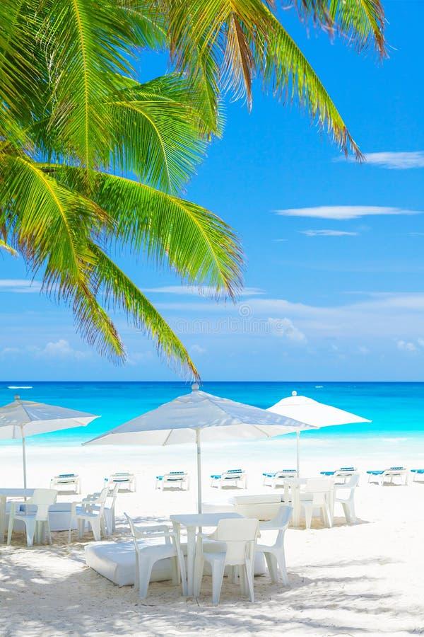 Lyxigt strandkafé royaltyfria foton