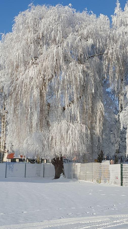 Mágica do inverno foto de stock