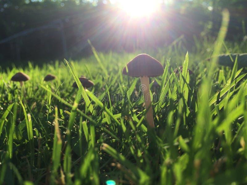 A mágica dos cogumelos fotografia de stock