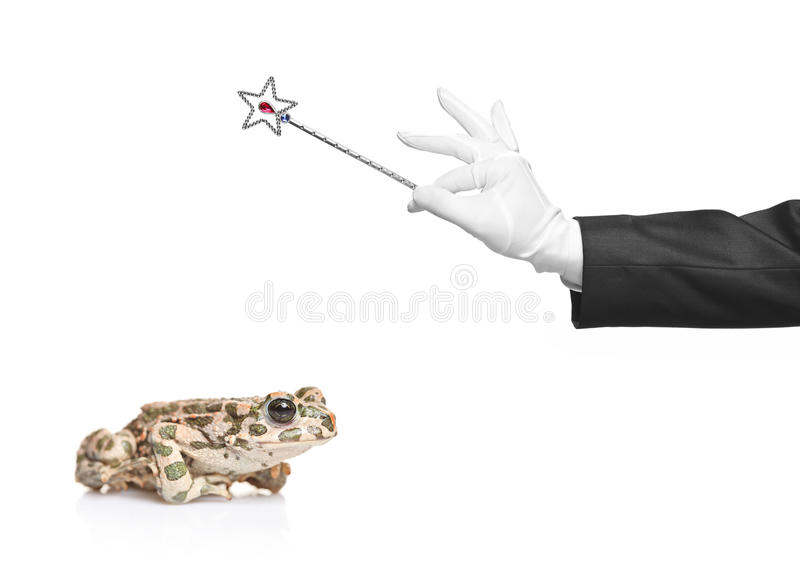 Mágico que prende uma varinha mágica e uma râ imagem de stock royalty free