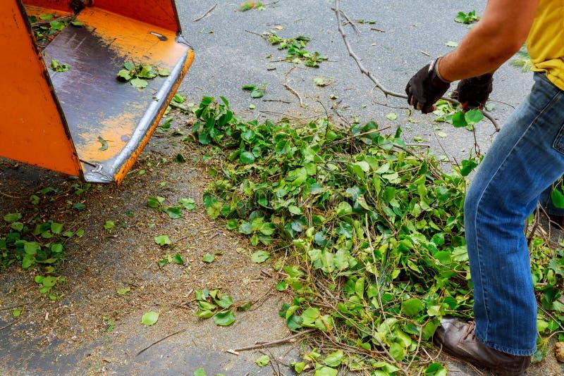 Máquina chipper de madeira que libera as madeiras shredded em um caminhão foto de stock