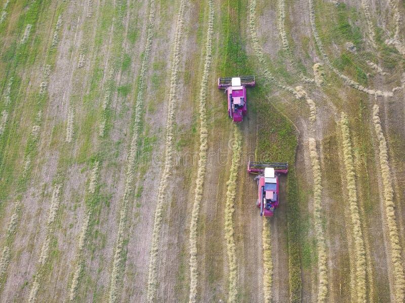 Máquina cosechadora que trabaja sobre el terreno Combina la cosecha de la cosecha de trigo maduro dorado imágenes de archivo libres de regalías