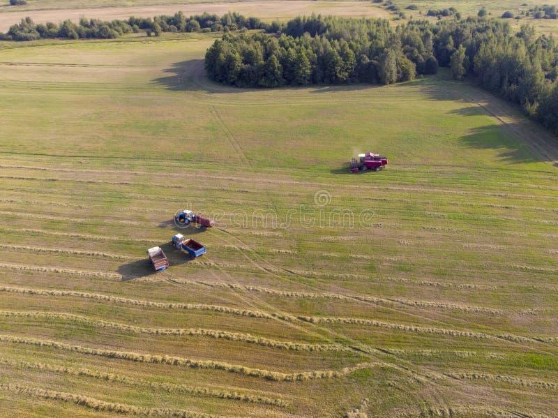 Máquina cosechadora que trabaja sobre el terreno Combina la cosecha de la cosecha de trigo maduro dorado fotografía de archivo libre de regalías