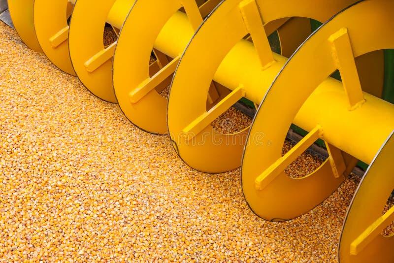 Máquina da ceifeira da colheita do milho com milho fresco na parte dianteira fotos de stock