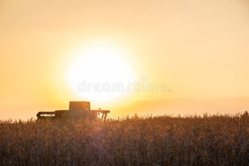 Máquina da ceifeira de liga que trabalha no campo de milho no por do sol multi imagem de stock